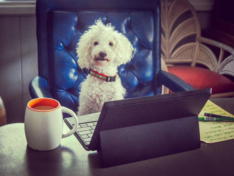 Could dogs in the office be the key to wellbeing and productivity?